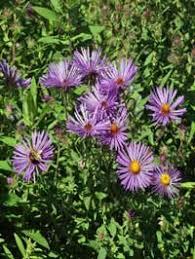 Identify Flowers - wildflowers scientific name chart identify wildflowers chart