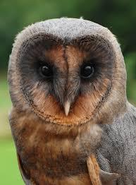 Barn Owl Sounds The Barn Owl Centre Sponsor Ashley The Barn Owl Centre Is A Uk
