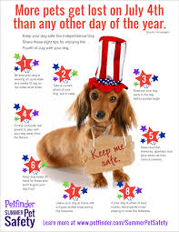 belgian sheepdog on petfinder 5 things humans do to make 4th of july fireworks fear u0026 anxiety