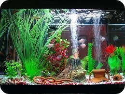 Awesome Fish Aquarium Decoration Choosing The Best Aquarium