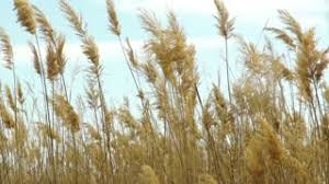 grass blowing in the wind stock footage videoblocks