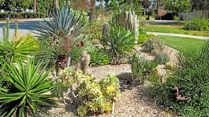 experts offer advice for drought tolerant landscaping in southern