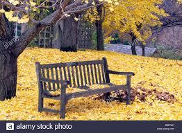 mn landscape arboretum wooden bench at university of minnesota landscape arboretum in