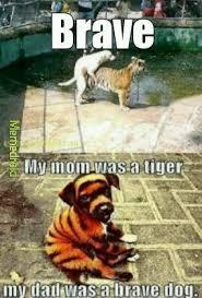 Sorry Memes - the best bestiality memes memedroid