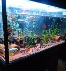12 best aquarium ideas images on aquarium ideas fish
