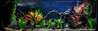 the fish doctor keep your tropical fish healthy and