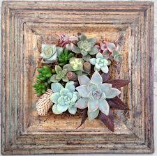 86 best succulents wall art images on pinterest succulent wall