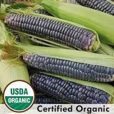 17 best heritage corn images on pinterest organic seeds