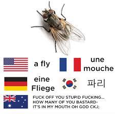 Australian Meme - just 100 really fucking funny memes about australia funny memes