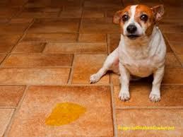 pet flooring