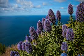 Madeira Flowers - photos from madeira portugal by photographer svein magne tunli
