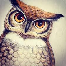 owl color sketch by leelilly on deviantart
