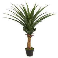 silk floor plants nearly