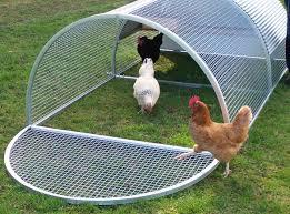 Backyard Chicken Coops Australia by Royal Rooster Chicken Coops Chicken Roll Coop Suits 4 6 Chickens
