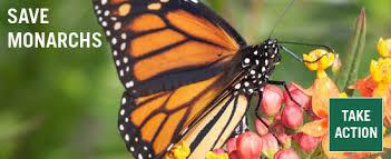 biologicaldiversity org images take sav