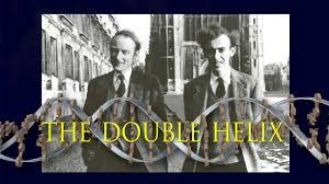 the double helix hhmi biointeractive