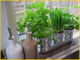 how to grow your own herb garden indoors gardening site