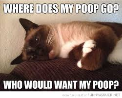 Thinking Cat Meme - funny sad thinking cat where does my poop go pics djfm the