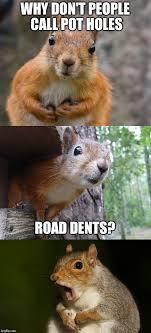 Squirrel Meme - bad pun squirrel memes imgflip