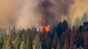 Wildfire Weed by Billions Of Dollars Of Real Estate At Risk To Wildfire Experts