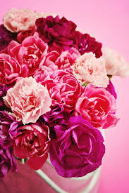 Birth Flower Of January - in and out of the garden the birth flower for january carnation
