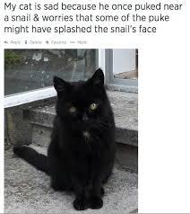 Sad Cat Meme - why this guy s cat is sad cat sad cat and animal