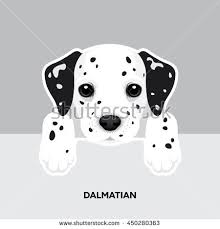 dalmatian stock images royalty free images u0026 vectors shutterstock