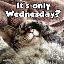 Funny Memes About Wednesday - wednesday memes funny happy wednesday images