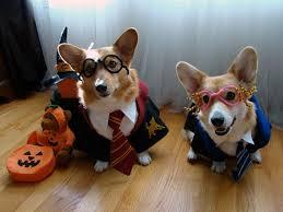 Dog Costume Halloween 25 Harry Potter Dog Costume Ideas Harry