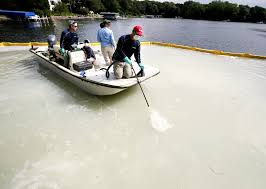 minnesota lake first to use new product to kill zebra mussels