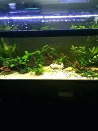 types of aquarium 40 gallon aquarium u2013 golead
