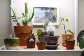 plants that grow in dark rooms growing plants in dark corners with coltura led grow frame clever