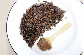cuisine du nord de la fourmis souterraines cuisine locale de la nourriture thaïlandaise