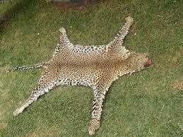 Cheetah Runner Rug Flooring Cheetah Rug Cow Skin Rugs Leopard Rug
