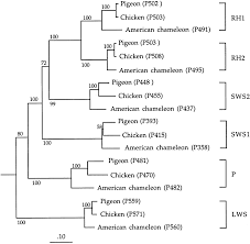 Livia Condo Floor Plan by Genetic Analyses Of Visual Pigments Of The Pigeon Columba Livia