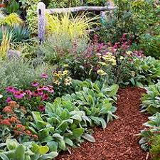 Fall Garden Plants Texas - the best flowers for north central texas no fuss gardens texas