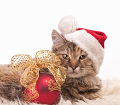 cats and christmas trees pet poison helpline