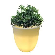 Buy Planters by Yuccabe Italia Led Planters Buy Planters U0026 Pots Online