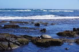 punalu u0027u black sand beach na u0027alehu hawaii life as we explore