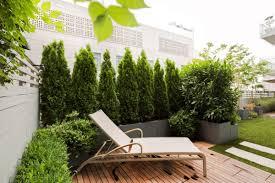 pflanzen als sichtschutz fã r balkon immergrüne pflanzen lebedige sichtschutz für terrasse sun deck