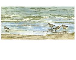 beach decor gift ideas sandpiper art pen and ink watercolor
