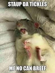 Rat Meme - rat face codarat twitter