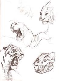 tiger sketches crazyant studio