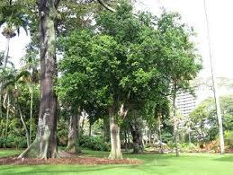 exceptional tree photos