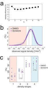 measurement of caveolin 1 densities in the cell membrane for