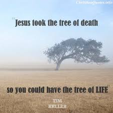 tim keller quote tree of christianquotes info