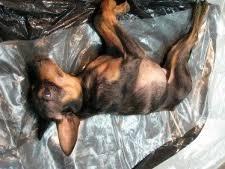 cremation procedure the procedure of cremation of animals animals