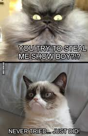 Colonel Meow Memes - colonel meow vs grumpy cat round 1 9gag