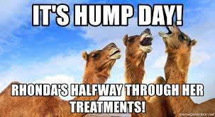 Hump Day Camel Meme - it s hump day rhonda s halfway through her treatments 3 wise