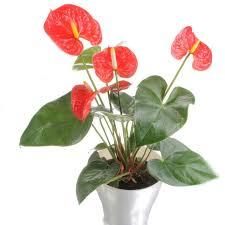 benefits of houseplants health benefits of houseplants hgtv